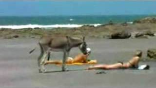 pakistan six Naughty Donkey - Video.flv