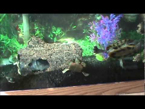 125 gallon turtle fish tank update black gravel youtube for Black fish tank gravel