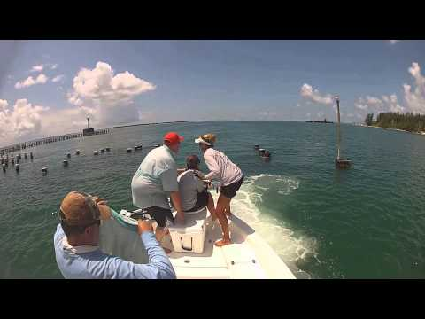 Insane goliath grouper battles in Boca Grande, Florida fishing charters