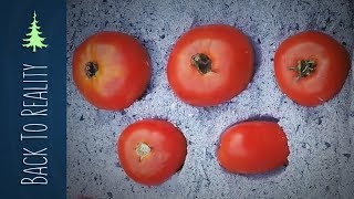 Experiment: Preserving fresh tomatoes in wood ash for up to 6 months?