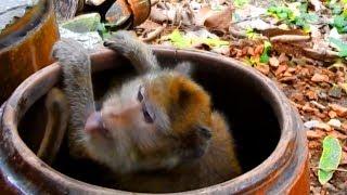 Amari Get Into The Water Jar To Drink Water| Amari Crying So Long Time Cuz Lost Baby Lori