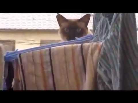 Кошачий супер прыжок   cat's jump Юмор! Прикол! Смех
