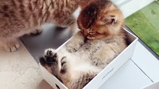 Cats Funny Videos - Funny Cat Compilation