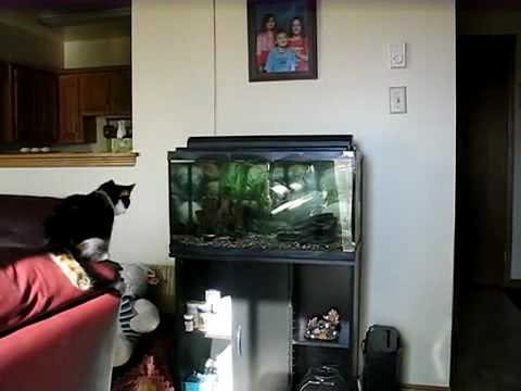 Cat vs Aquarium