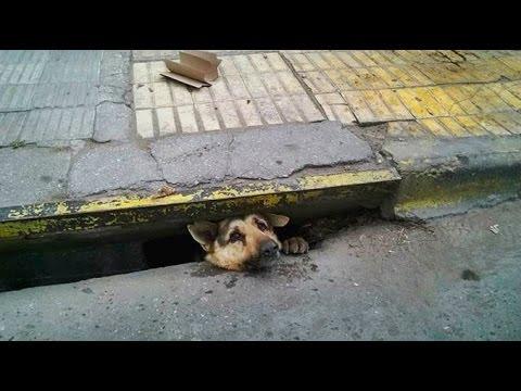 Emotivo rescate de un perro atrapado en la alcantarilla
