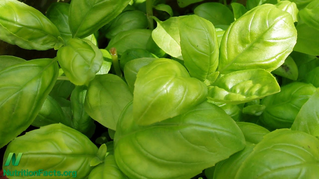 Is Hydroponic Basil as Healthy?
