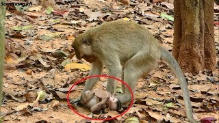 In this video completely Possum do very bad on a newborn baby monkey, Samnnang kh