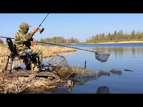 видео с фидером на реку за плотвой