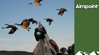 Massive Swedish Goose Hunt