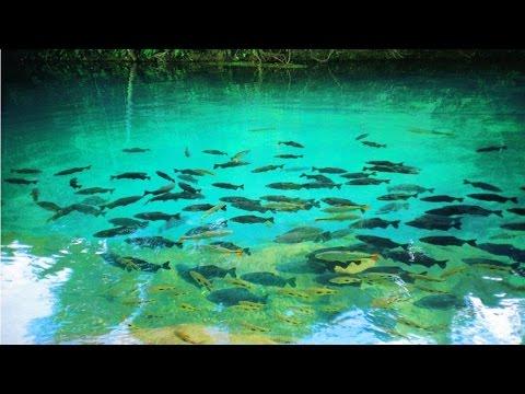 Clique e veja o vídeo Ecoturismo - Bonito