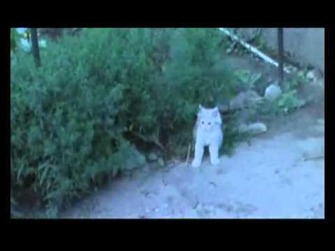 Кот. Прикольный кот Персик