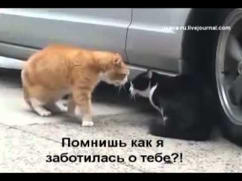 коты и кошки приколы видео: