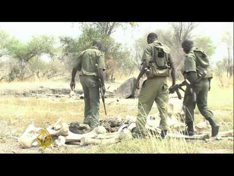 Zimbabwe's poachers poison up to 90 elephants