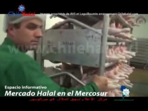 CHILEHALAL VISITA UN MATADERO DE POLLOS
