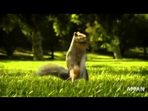 Watch Kit Kat Squirrel Ad 2010. I LOVE YOU Song in Nestle KitKat...