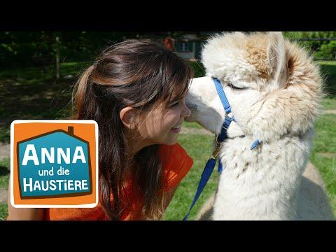 Alpaka   Information für Kinder   Anna und die Haustiere