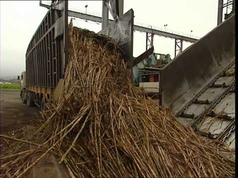 Fabrication du sucre c