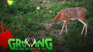 Bow Hunting Kentucky Whitetails | Land Management Tips for Hunters (#408) @GrowingDeer.tv