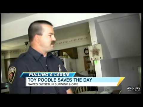 Hero Dog Saves Owner :)