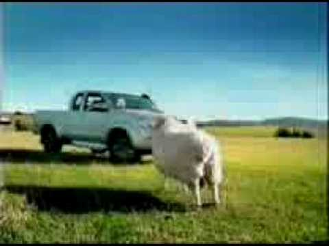 funny cows. Funny Cow Video