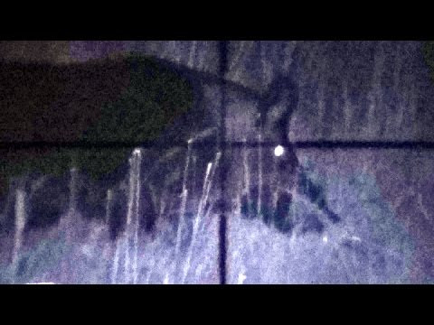 Hunting Old Florida- Air Gun Hog Kill On Scope Cam