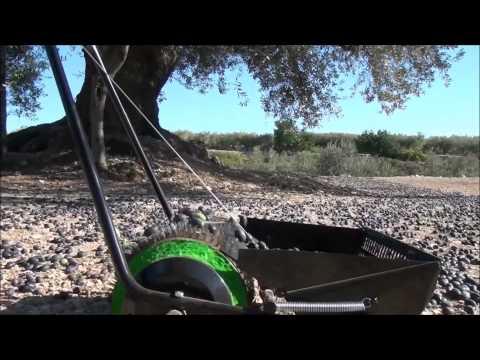Felipe Borras Dip Zeytin Toplama Makinesi - Taşlık Arazi