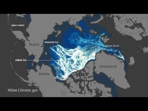 Watch 25 Years of Arctic Sea Ice Disappear in 1 Minute