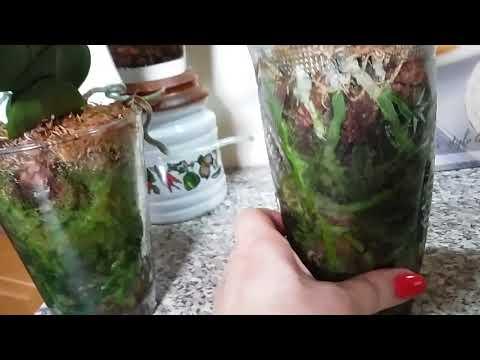 Зеленый мох в горшке зло или благо?