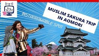 Muslim Trip to Aomori : TOP Sakura Spot in Japan!!رحلة إسلامية إلي أوموري – مكان رائع لرؤية الساكورا
