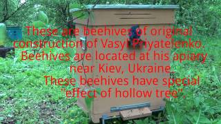 Beekeeping in Ukraine: Unique Ukrainian Hives Where Bees Live Like in a Hollow Tree
