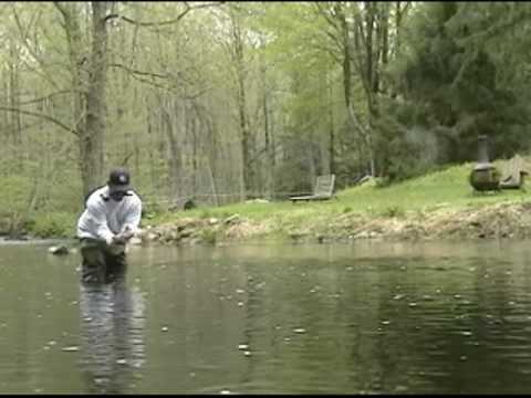 Fly Fishing Trout on the Saugatuck River Connecticut
