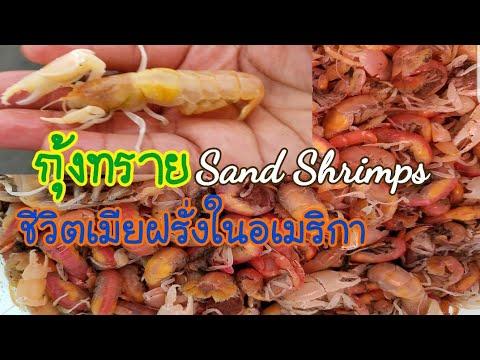 หากุ้งไปตกปลาSand Shrimp ชีวิตในอเมริกา