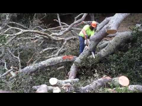 STIHL MS390 best chainsaw in the world