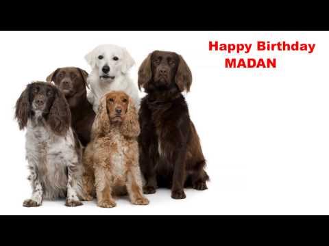 Madan   Dogs Perros - Happy Birthday