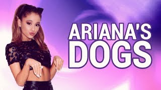 All of Ariana Grande's Dogs!