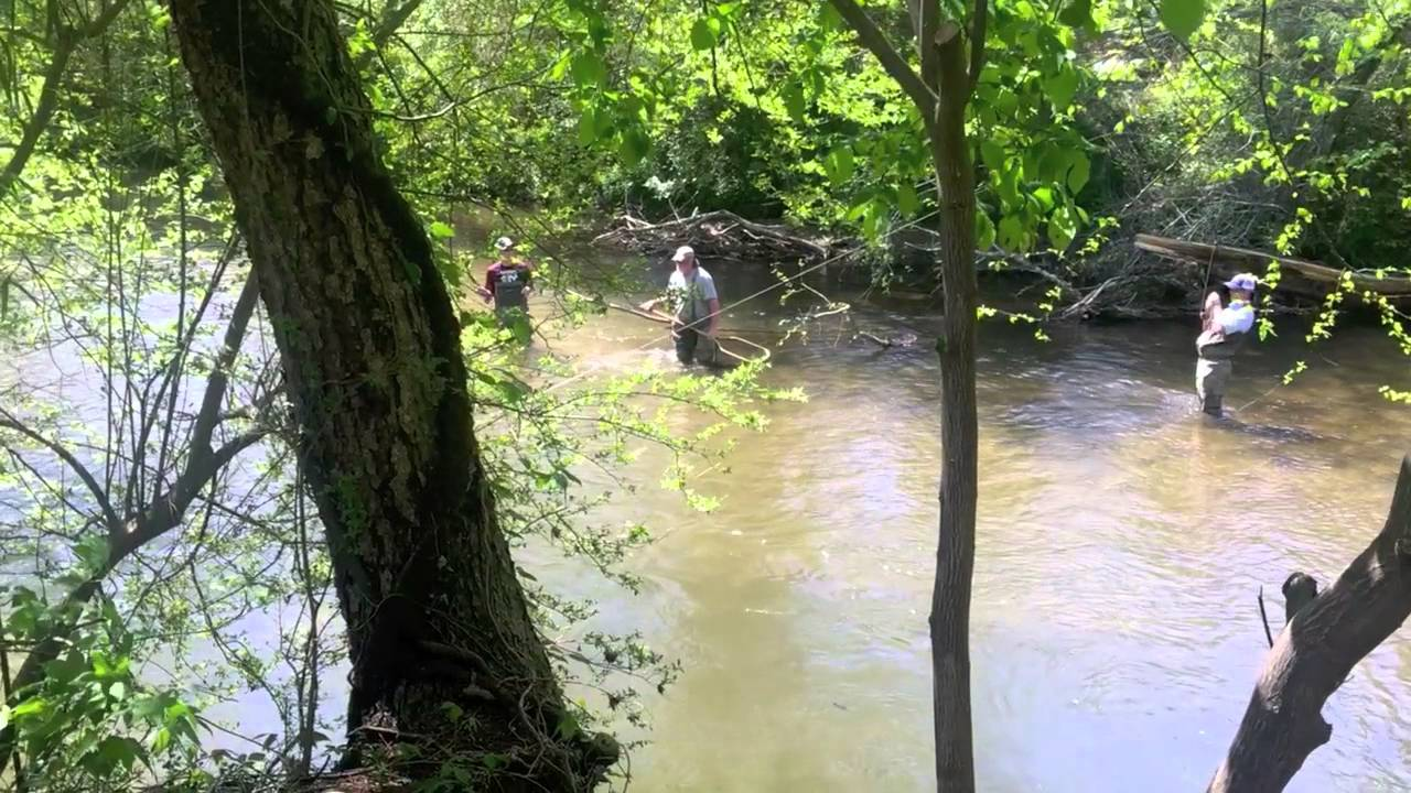 Dry Fly Fishing with Unicoi Outfitters