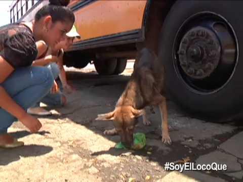 SoyElLocoQue - Indira Rojas