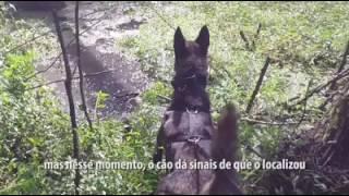 cachorro pega ladrao em St Catarina