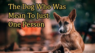 Real Animal Communication Stories! The Dog Who Mean To Just One Person