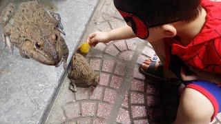 Siêu nhân Bi và người nhện Bo vồ ếch ❤ABC❤