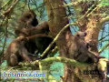 Baboons in Their Natural Habitat (Britannica.com)