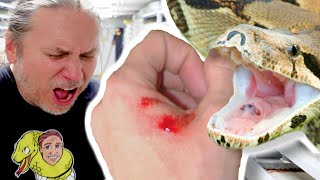 35 SNAKE BITES WHILE GENDER CHECKING BABY BOAS!! OUCH!! | BRIAN BARCZYK