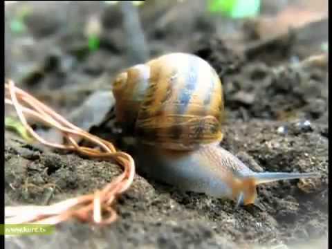 Arka Bahçede Bilim   69  Bölüm   Yumurcak Tv   Yeni