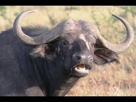 Africa's BLACK DEATH!