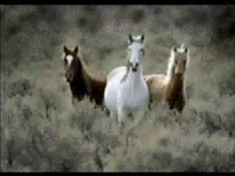 the rolling stones-wild horses