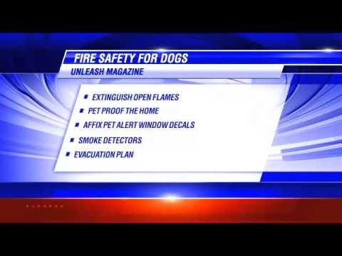 Fire Safety for Dogs