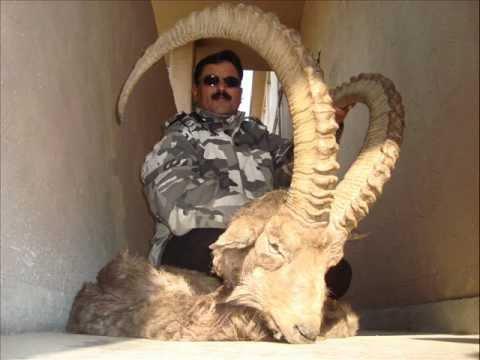 Ibex Hunting in Balochistan Deer Ibex Urial Hunting