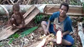 Papuas are operating cassowary bone // Папуасы орудуют костью казуара