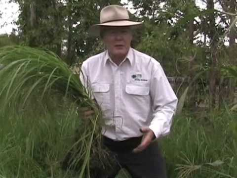 Farmers Save the World No.1  (Carbon Cycle - Mycorrhiza & Healthy Grass) Grazing Bestprac