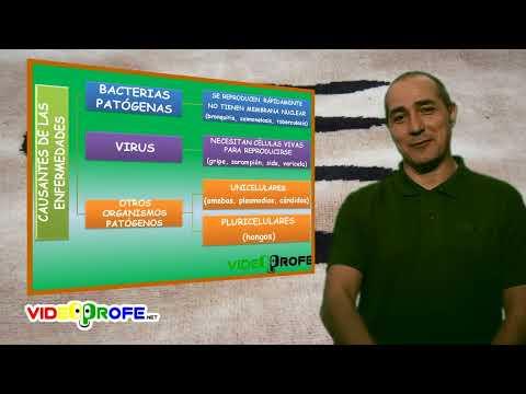 02. Microorganismos que causan enfermedades. 6º Conocimiento del Medio. Videoprofe.net